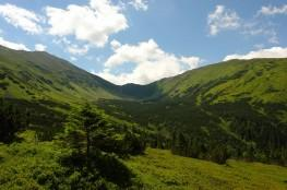 Zakopane Atrakcja Dolina Dolina Chochołowska